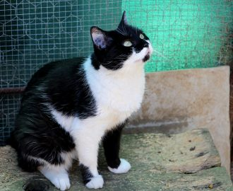 Lilou chatte à adopter