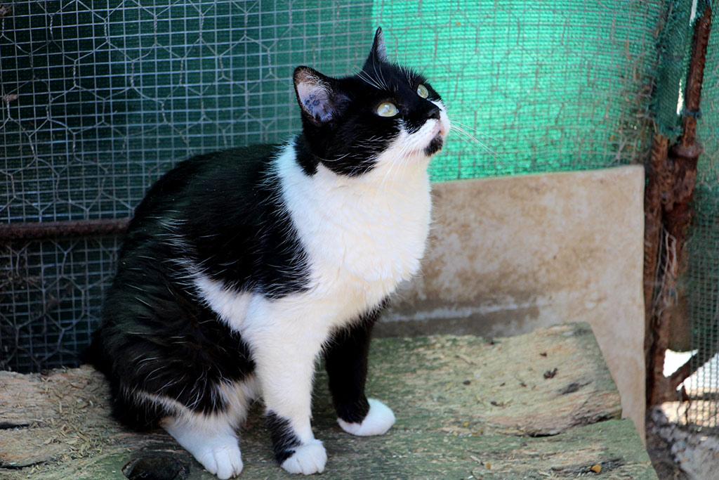 Lilou a été adoptée en Février 2017