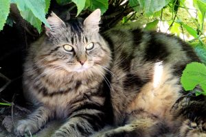 peluche chat à adopter