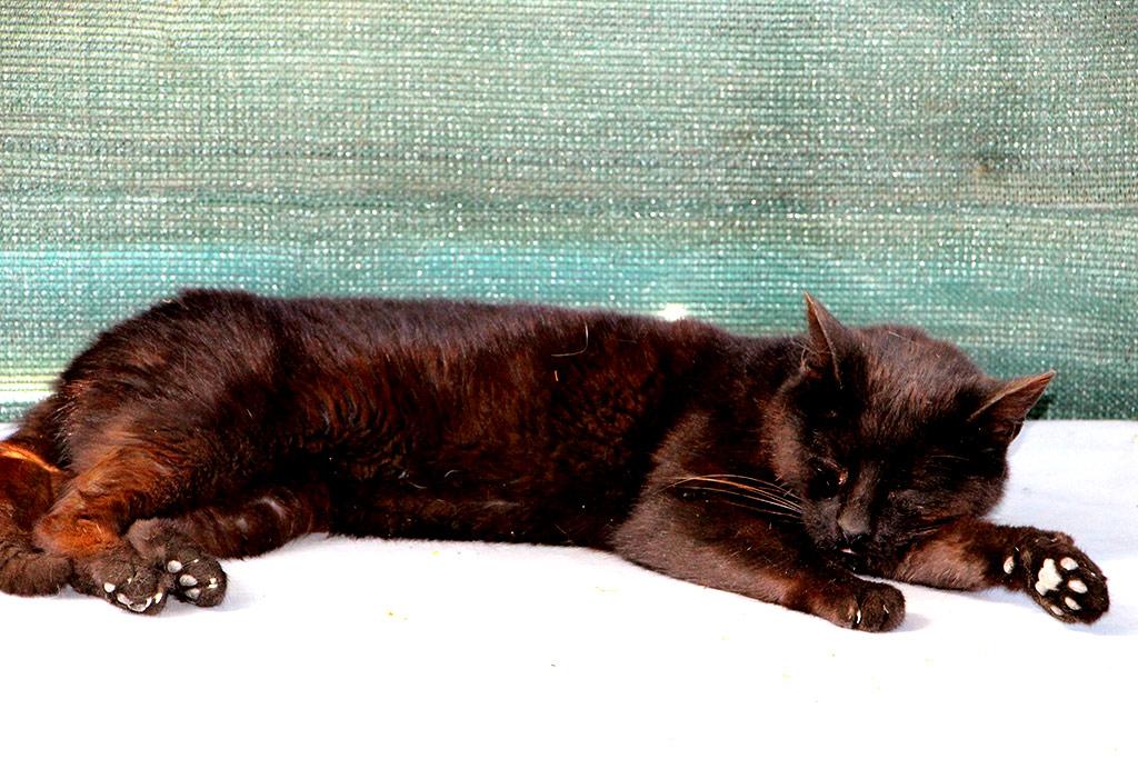 Miss chatte a été  adopté en novembre 2017