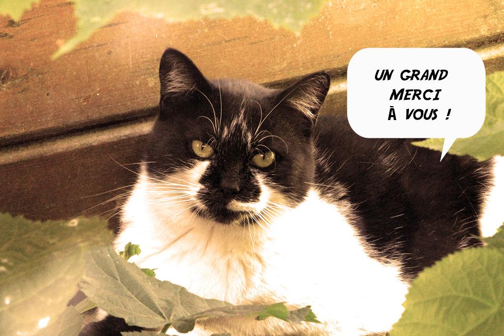 Loto des chats à Draveil :  un grand merci