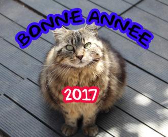 adoptez un chat en 2017