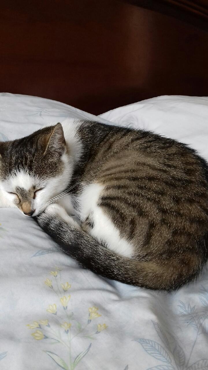 Ninou chatte à adopter
