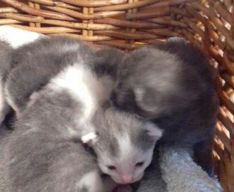 chatons petits chats