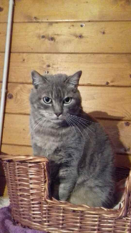 Noël chat à adopter à Draveil