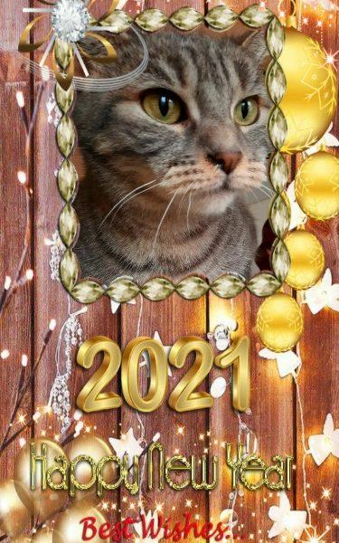 Bonne année 2021 avec IPA
