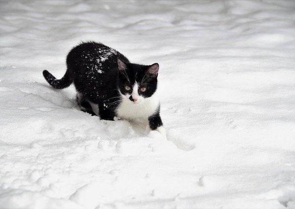 La neige et les chats ... nos conseils.