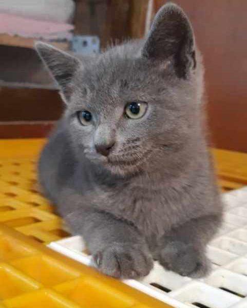 Spirou chaton a été  adopté le 30/07/21