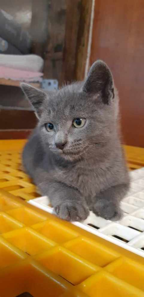 Spirou le chaton vous attend